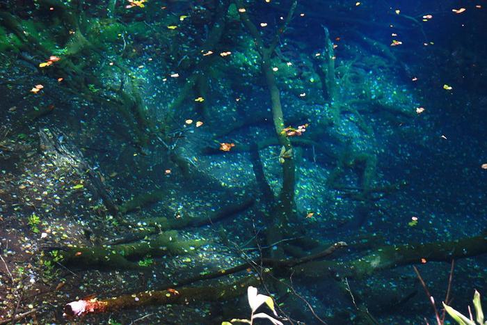 近くに寄ると信じられないほど透明で澄んだ水なのがよくわかります。