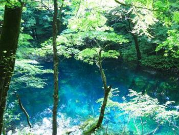 木々の間からでもはっきりと透き通ったブルーが見えます。 葉の緑とのコントラストもとても絵になりますね。