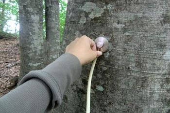 力強いブナの鼓動が感じられるように、コース内にはなんとブナの木の音を聴くための聴診器まで用意されているとか!都会ではなかなか味わえない貴重な体験ができます。