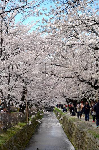 哲学の道とは、銀閣寺から若王子神社まで続く約2キロメートルの道です。哲学の道は、日本の道100選にも選定されており、春は桜、秋は紅葉の名所として知られています。