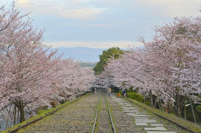 蹴上インクラインは、琵琶湖疎水と宇治川を結ぶ途中に造られた傾斜鉄道です。1940年前後に休止されましたが、南禅寺近くの蹴上インクラインは、往時の姿を今に残しています。