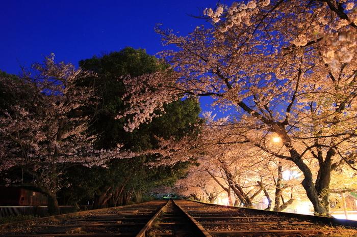 蹴上インクラインでも桜のライトアップが行われます。大勢の人で賑わう日中とは異なる雰囲気が漂う、夜桜鑑賞を楽しんでみてはいかがでしょうか。