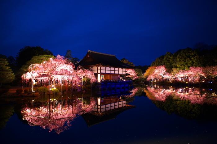 夜になると、平安神宮境内のライトアップが行なわれます。ライトを浴びて紅色に輝く満開の八重紅枝垂桜を、波一つ水面が鏡のように映し出す様は神秘的で、いつまでも眺め続けていたくなります。