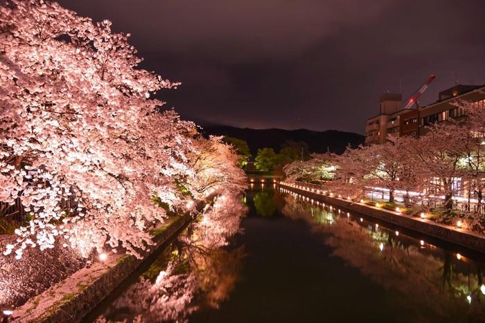 夜になると、岡崎疎水両技師の桜並木がライトアップされます。漆黒の闇夜に、ライトを浴びて輝く桜並木が浮かび上がり、鏡のような水面が桜並木と夜空を映し出し、幻想的な雰囲気が漂います。