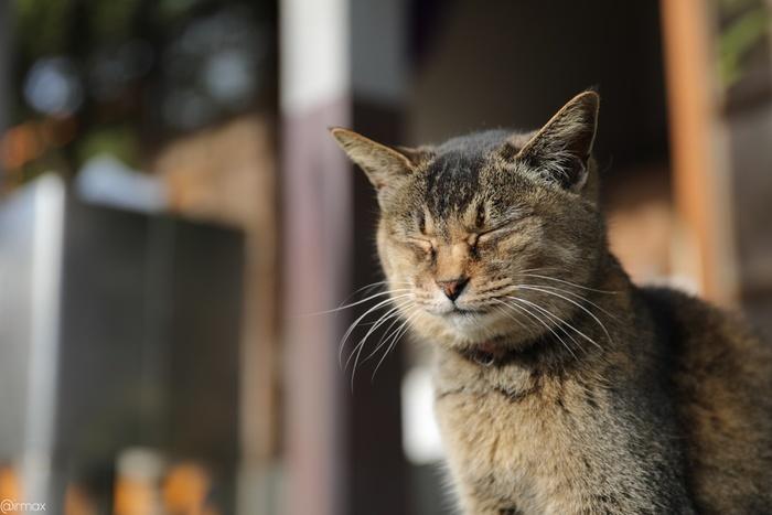 猫カフェとは、猫に触ったり一緒に遊んだりできるカフェのことです。たくさんの猫を見れたり、猫と一緒にのんびりできることから多くの猫好きさんが通い詰めています。
