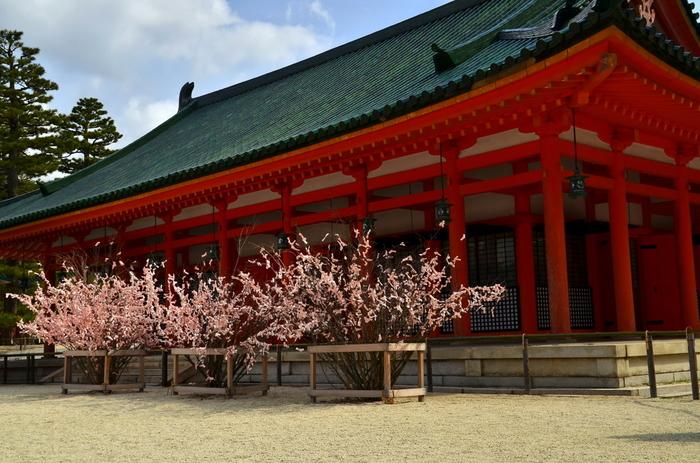 境内の神楽殿前には、「桜みくじ」の木が並びます。木に結びつけられた桜色のおみくじが、桜の花びらのように見え、遠望すると、神楽殿前に桜が並んでいるように見えます。