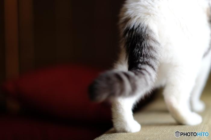 猫カフェは、猫好きさんの楽園。可愛く勝手気ままな子たちが愛嬌をふりまいたりゴロゴロと寝ていたりと、自由に生活しています。そこにちょっとお邪魔して、日々の疲れを癒しましょう。