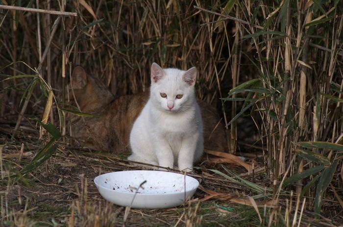 お店で売られている専用のおやつならあげられます。猫の大好物をあげれば、きっと人気者になれること間違いなしですね。