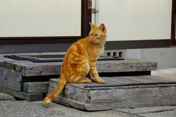 """犬島という名前ですが、ここでも多くの猫が気ままに歩く姿を目にします。この名がついた由来は、""""島内に犬に似た岩があったから""""、""""枕草子で一条天皇が犬を追放した島の比定地であったから""""など、諸説あります。"""