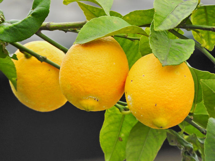 豊島では魚介類はもちろん、野菜や果物もハイクオリティなものが食べられます。それは、壇山のふもとを流れるきれいな川のおかげです。レモンの他みかんやオリーブ、またお米も美味しいのでぜひ食べてみてください。