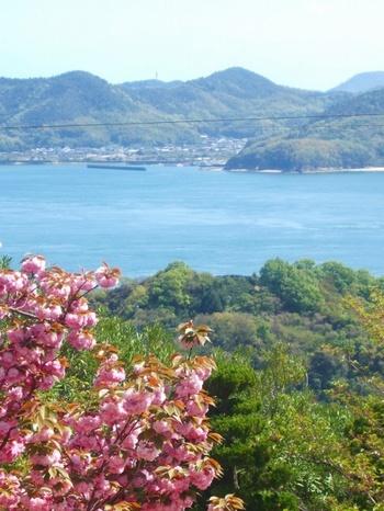 生口島ではレモンやみかんなどの柑橘類の生産が盛んにおこなわれています。その秘密は、島の傾斜。島の約半分が急な傾斜になった土地なので、日光がよくあたりこうした作物が育ちやすい環境です。