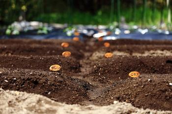 なんと言っても、土地の価格は都市部に比べると格段に安いです。憧れの自分の畑で「苦労して」野菜を育てることで、食べ物への慈しみや自然のものを口にできることへの喜びを再認識したり・・・。土地付きの手頃な物件が多くあるのも田舎ならでは。