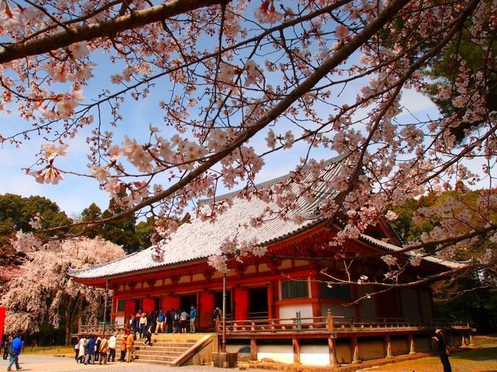 京都市伏見区東側に広がる笠取山に鎮座する醍醐寺は、874年に空海の孫弟子・聖宝によって創建された寺院です。かつて、豊臣秀吉が「醍醐の花見」を行った場所でもあり、古くから桜の名所として知られています。