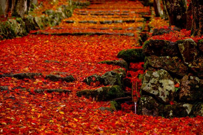 社へと続く参道は、天然の真紅の絨毯さながらです。