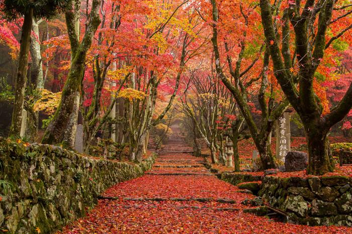 200本ものもみじの古木が、紅葉の季節には空を真っ赤に染め上げます。落葉で埋め尽くされる参道は圧巻の眺めです。