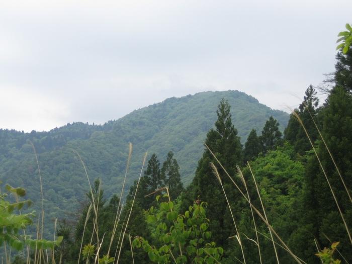 己高山山頂付近には、石塔や庭園跡などが残る「旧鶏足寺跡」があります。 仏教遺跡や荘厳な樹木、美しい草花、山頂からの景色も素晴らしく登山コースとしても人気です。