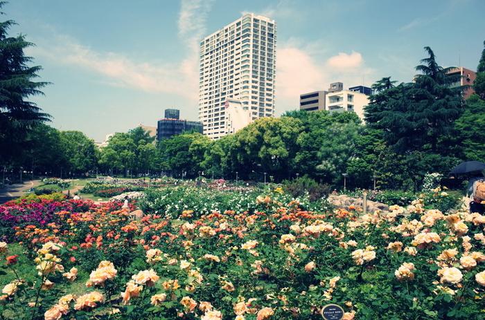 大阪市西区靭本町にある広大な都市公園「靭公園」(うつぼ公園)。約9.7haもある敷地の中は、たくさんの花や緑で彩られています。都会にいながら自然の移ろいを感じられる憩いの場で、訪れる人々は思い思いにゆったりした時間を過ごしています。