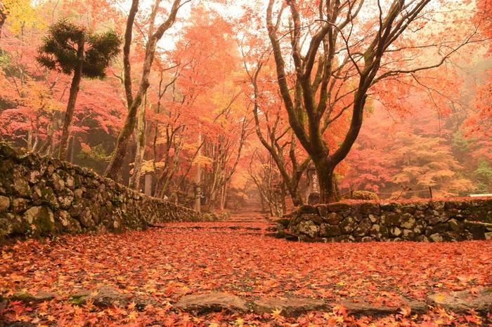 紅葉のシーズンは、多くの観光客で賑わいます。緩やかに上る参道に敷き詰められた落葉の絨毯を、人気のないうちに歩きたいのなら早朝に訪れるのがいいですね。朝靄にけむる紅葉も趣があっていいものです。