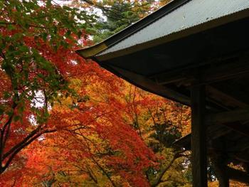 鶏足寺の紅葉は、毎年11月中旬頃から色づき始め、見頃を迎えるのは11月の下旬頃(年によって前後します)。