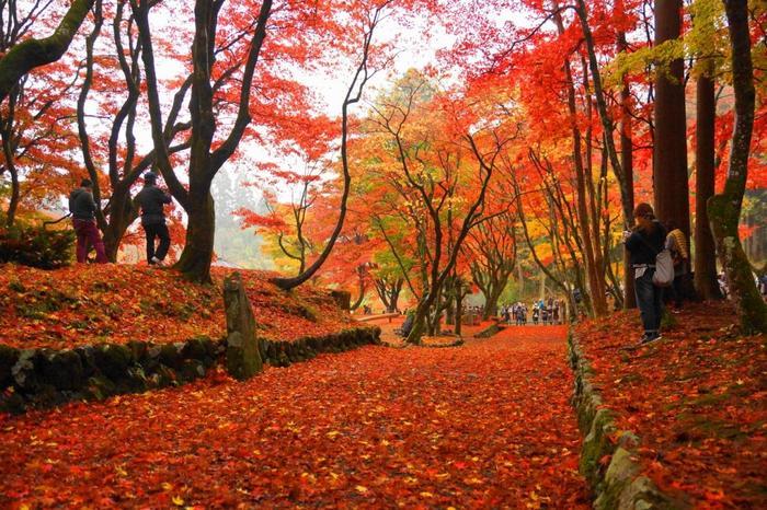 紅葉の饗宴。