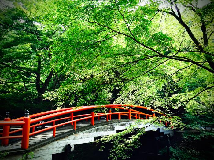 東京都心から、車で約1時間半。群馬県渋川市にある伊香保温泉は、紅葉の名所としても有名な温泉街です。伊香保温泉の湯元付近にある「河鹿橋」付近は、秋になると紅葉目当ての観光客で賑わいを見せます。