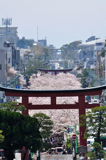 JR横須賀線・鎌倉駅東口を出たら、正面の道を進んで「若宮大路」に出ましょう。若宮大路には、由比ヶ浜側から「一の鳥居」「二の鳥居」「三の鳥居」が並んでいます。