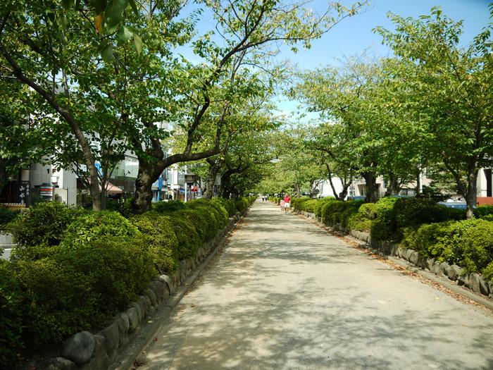 「二の鳥居」から「三の鳥居」の間には、「段葛(だんかずら)」と呼ばれる盛り土をした道が中央に通っています。段葛は、八幡宮までの距離が実際に長く見えるように、八幡宮に向かって道幅を狭めて作っています。  桜の頃は花見の名所になりますが、桜花が散った後は、清々しい緑のトンネルになります。