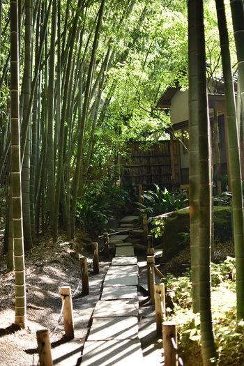 竹葉から降り落ちる陽光と、清涼な空気が気持ち良い竹林内。猛暑の夏期でも竹林内はひんやりとしています。  廻り歩けるように石畳や飛び石が連なっていますので、ゆったりと歩きましょう。