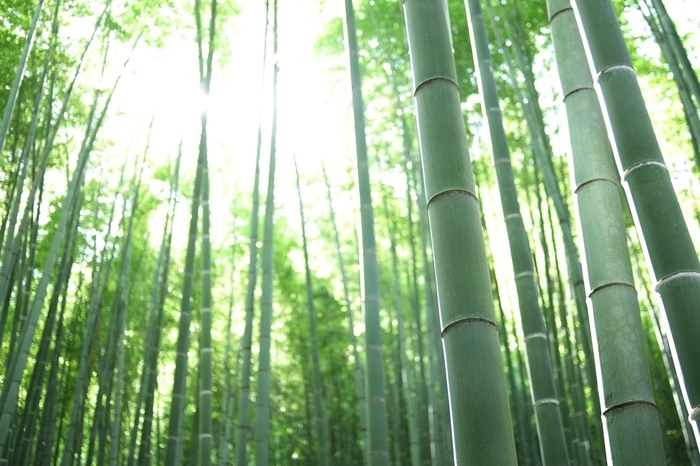 竹林は、約2,000本の孟宗竹の庭。一歩足を踏み入れれば、日頃の多忙と喧騒を忘れるはず。