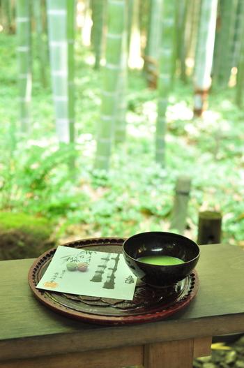 竹林を眺めながら、一服しましょう。抹茶に添えられるのは和三盆糖。鎌倉彫の盆にのせて出されます。