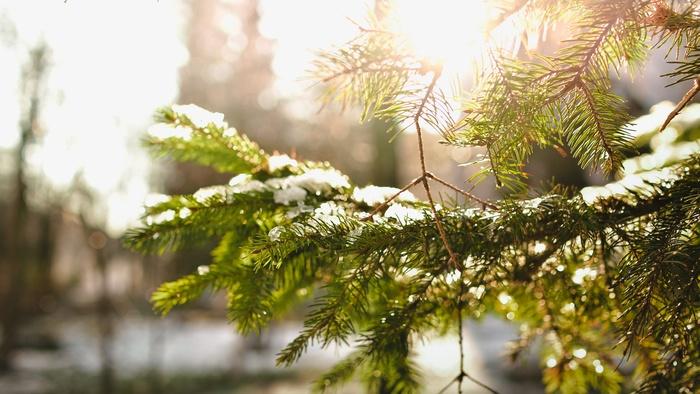他のヨーロッパ諸国と同じく、スウェーデンでもクリスマスの25日からさかのぼって4週間前の日曜日から「アドベント」と呼ばれるクリスマス準備期間が始まります。毎週日曜日に1本ずつろうそくを点等しながらクリスマスを待ちわびます。このアドベントの日から家ではクリスマスの飾りつけをしたりクリスマス期間に食べられる御菓子などを作ったりと準備がはじまります。