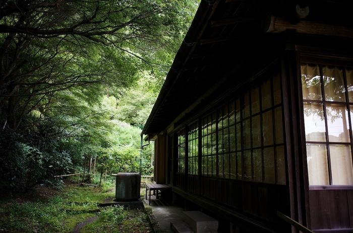 【画像は、新緑が眩しい「英勝寺」境内。「英勝寺」は鎌倉唯一の浄土真宗の尼寺。】