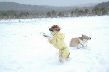 雪の季節はこんな感じに!犬は雪が好きな子が多いですよね。あたたかくして遊びましょう。