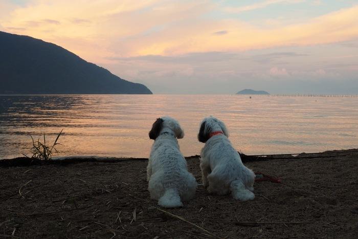 ペット同伴OKの施設は増えてきました。旅行好きのひと、ペット好きのひとのニーズを満たしてくれる良い環境になってきましたね。でも、犬って環境の変化にすごく敏感です。習慣性の強い動物なので、ストレスになってしまう可能性もあります。だから充分なリサーチをして、一緒に楽しい思い出をたくさん作ってくださいね。 ワンちゃんも「楽しいワン!」と思ってくれたらとっても幸せですね♪
