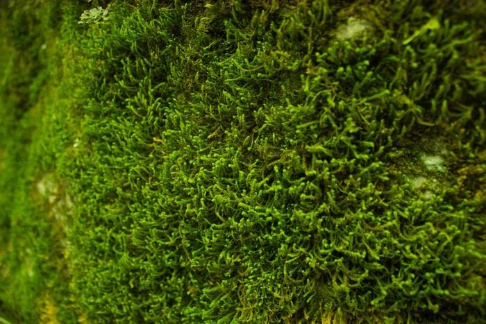 手のひらサイズの小さな森。身近なもので作れる【苔テラリウム】はじめてみませんか?