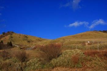 熊笹が一面に広がる「西天城高原」。大放牧場もある、のどやかな場所です。  駿河湾の素晴らしい景色が望め、天候に恵まれれば、富士山の絶景も。  西天城高原「牧場の家」は、西伊豆の定番の休憩所と撮影ポイント。このレストランでは、美味しいソフトクリームが頂けます。