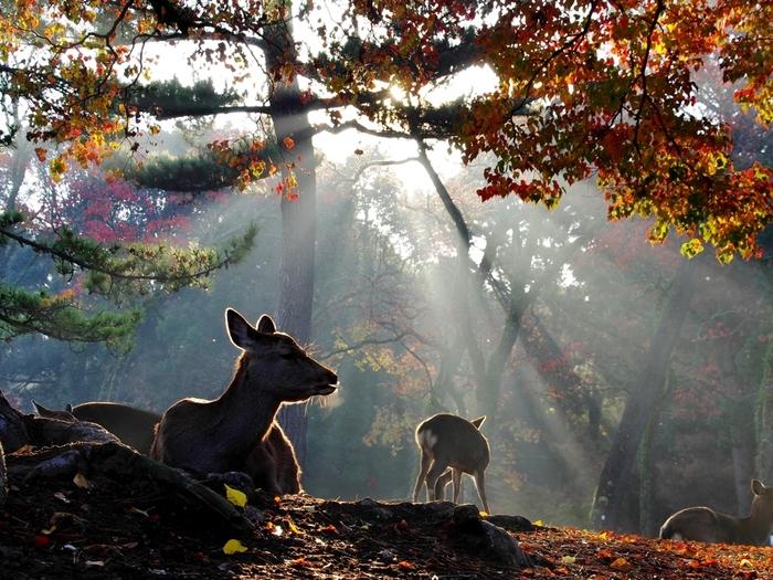 奈良といえば、奈良公園の可愛い鹿たちやたくさんのお寺巡り・・・そんな合間にひと息つける素敵なカフェが実はたくさんあるんです★