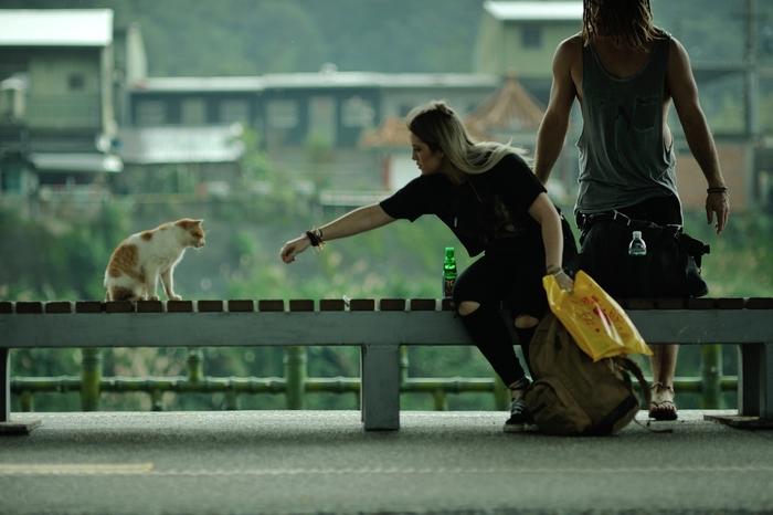もちろん、どちらのお店でも猫たちに直接触ることができます。ただし、無理にだっこしたり膝にのっけたりするのはやめましょう。猫は気ままな生き物なので、無理やりそうしたことをされるとストレスになってしまいます。