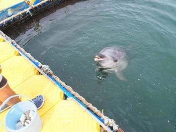 日間賀島の魅力は「ドルフィンビーチ」。 イルカと触れ合える体験は一生の思い出に。 イルカウォッチングも楽しめます。