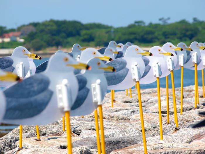 佐久島アート③「カモメの駐車場」。 ずらっと整列したカモメたちは圧巻です! 実はこちらの作品、風を見るための装置なんです。