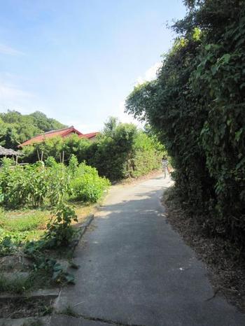 トトロの道とも呼ばれている佐久島の山間。 自然豊かな島を自転車で回るとこんな道を発見できます