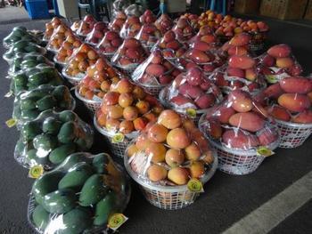 マンゴーの季節にはこんな種類豊富なマンゴーが出まわるんだとか!