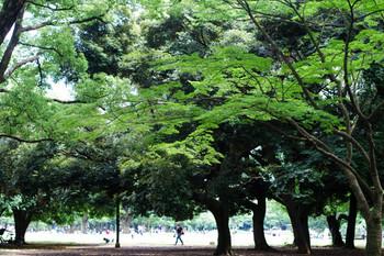 ゆったりとした空気感。「代々木エリア」でリラックスする休日散歩コース