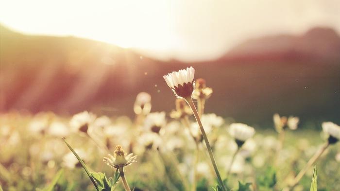 体がリラックスして気持ちが穏やかになると、不思議と物の見方や考え方も前向きになっていきます。毎日をHAPPYに過ごすには、心と体のバランスがうまくとれていることも大切なんです。時には体の力を抜いて、気持ちを上手に整えてみて下さいね☆
