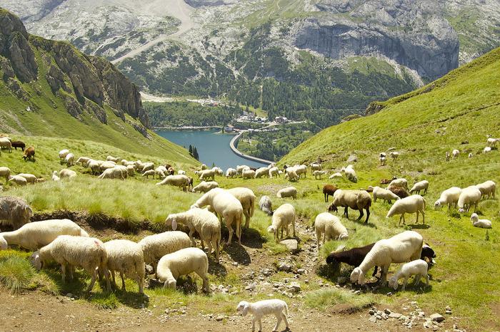 ドロミテでは、コースによっては本格的な登山装備をしなくても気軽にハイキングを楽しむことができます。羊たち放牧されている山岳地帯ならではの牧歌的な景色は、どこか懐かしく、訪れる人々の心を癒してくれます。