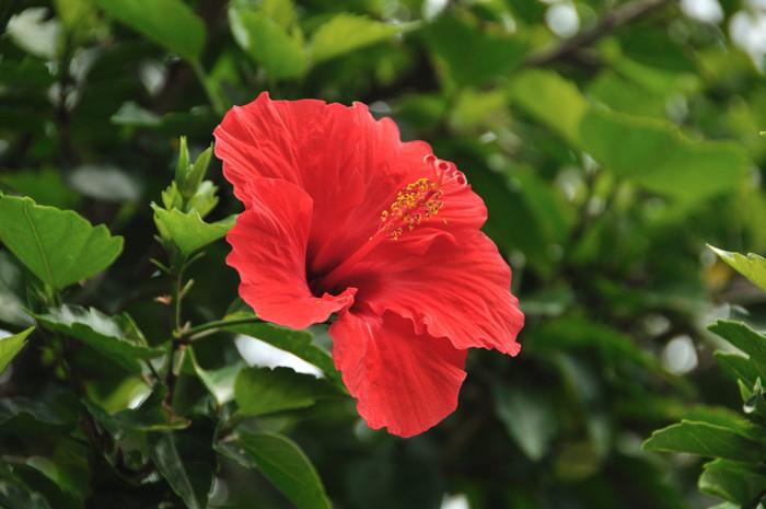 温暖な気候ならではの花も見られます!