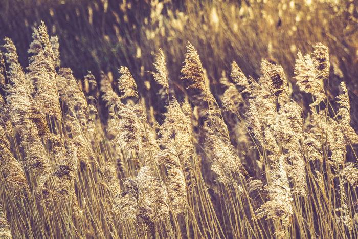 黄金の海のように豊かな大麦畑を、まるで撫でるようにそよぐ西の風。そんな希望を感じる世界の中で恋人たちが愛を誓う様子を歌ったと言われている曲です。聴いているとあたたかな風景が浮かび上がり、ほっこりした気分になれるでしょう。