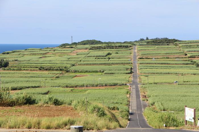 【喜界島】  これまで取り上げてきた島に対しては面積も広く、自然の宝庫です。 海も平地も山も満喫できる一度で二度も三度もおいしい島。
