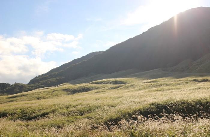 10月ごろから見ごろをむかえるススキ。 毎年3月に行なわれる山焼きの時まで楽しめます。