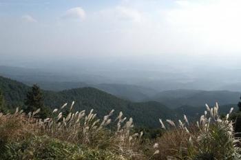 三重県・笠取山に広がるのが、青山高原です。 山の斜面一帯に広がるススキは、見ごたえありです。